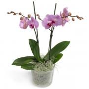 Цветна Орхидея